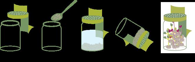Etapes pour faire germer ses graines