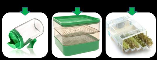 Les types de germoirs pour graines germées